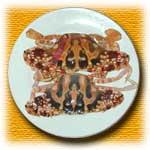 food-tt-20000126a02.jpg (5487 bytes)