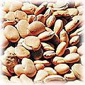 food-bean-flat.jpg (11124 bytes)